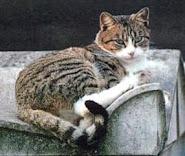 """Nicolas, le 1er """"chat libre"""" de l'histoire"""