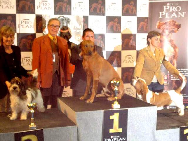 Ch. Aresvuma Ha-Shah Mejor de Grupo Exposición Nacional Murcia 2012
