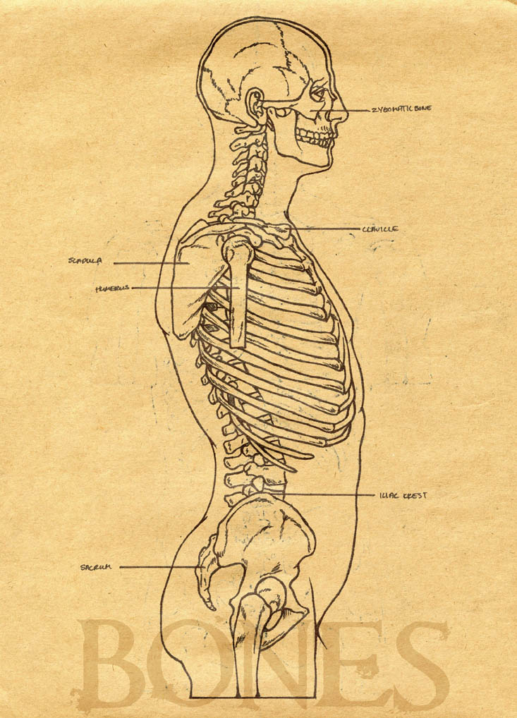 bones study guide Download the lovely bones study guide subscribe now to download this study guide, along with more than 30,000 other titles get help with any book download pdf introduction print print.