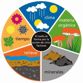 Bienvenidos a mi blog ciencias naturales el suelo y sus for Como se forma y desarrolla el suelo