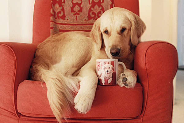 Comidas proibidas para cachorro