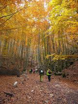 Bosques singulares