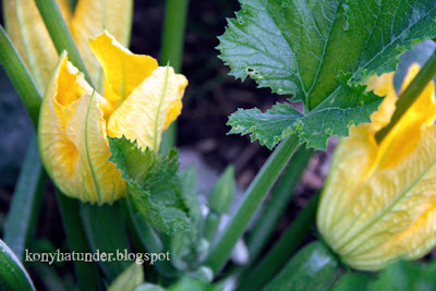 august-in-the-garden-courgette