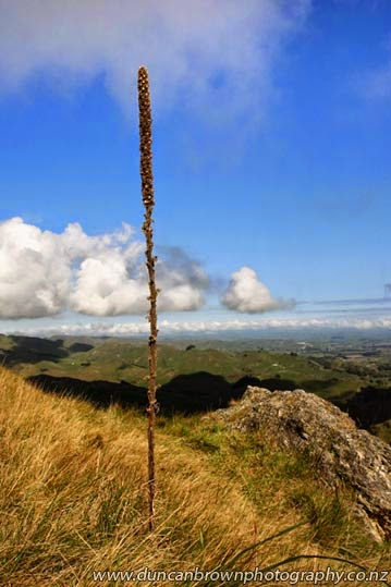 Tall brown thing on Te Mata Peak photograph