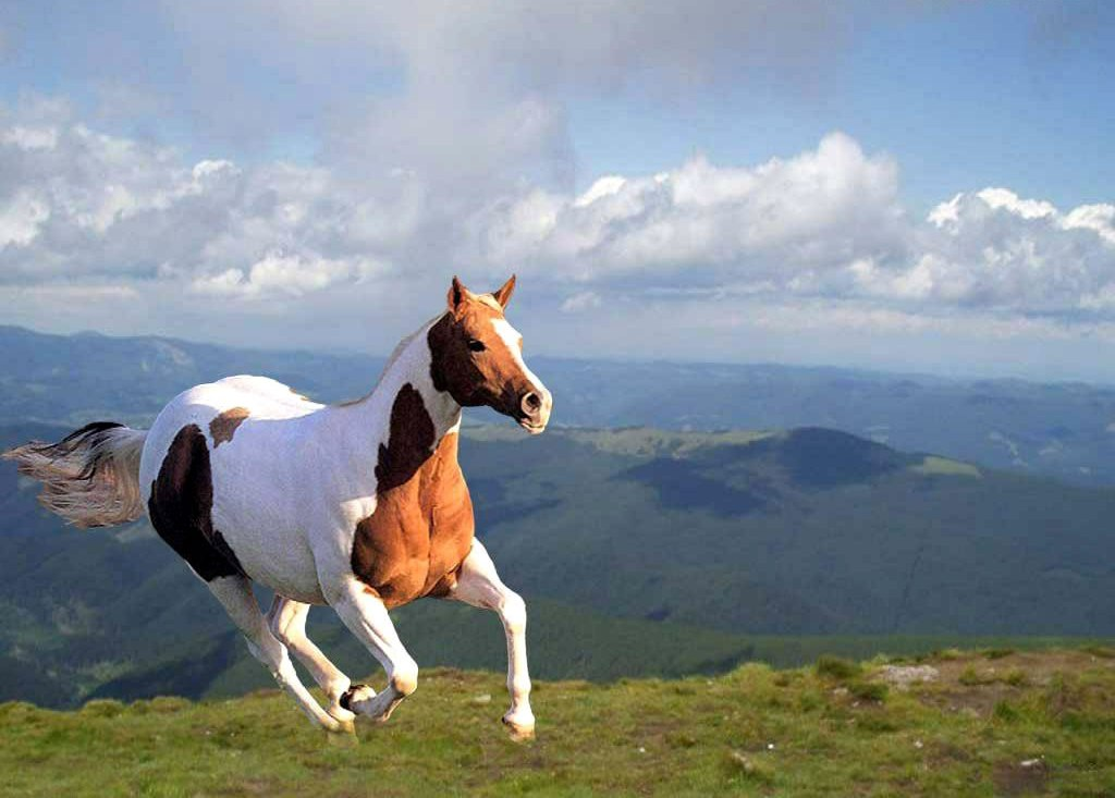 Beautiful Horse Pictures Desktop Background Horse Beautiful Desktop