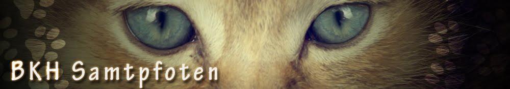 Katzen-Samtpfoten oder Kratzbürsten?