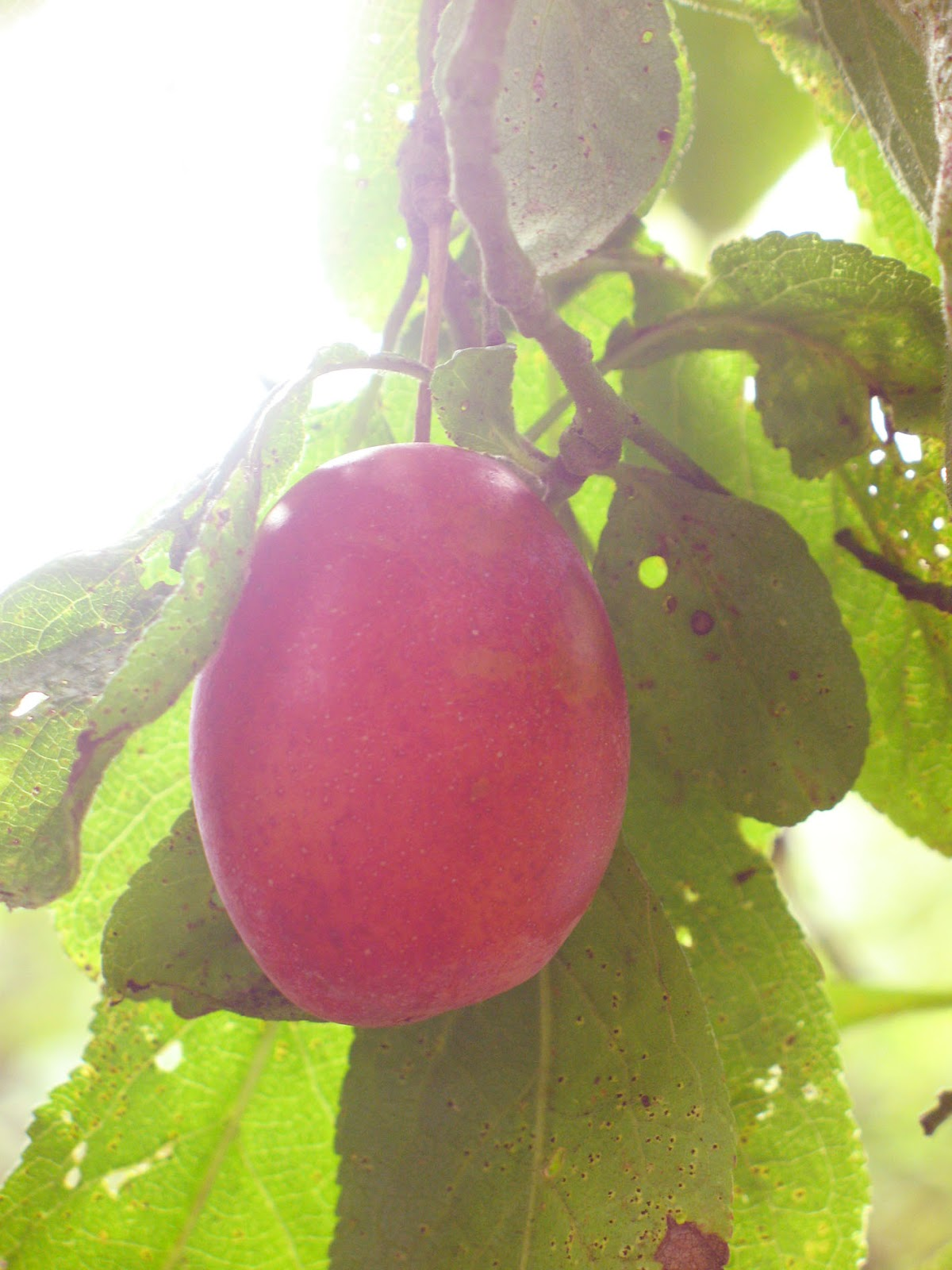 Inspiration for weddings, invitations and stationery: plum jam ...