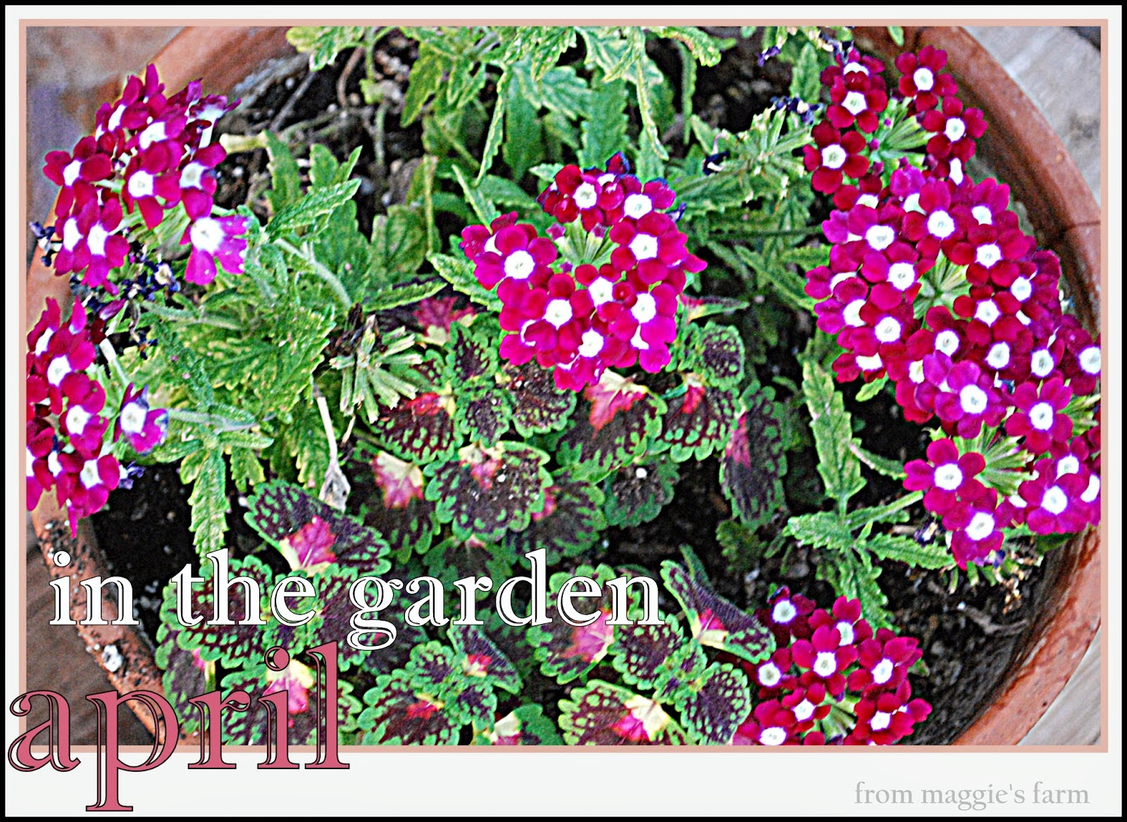 in the garden this month