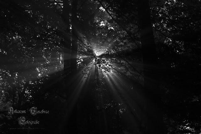 Sonnenstrahlen die durch den Nebel strahlen