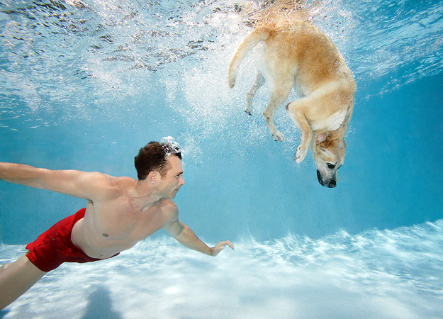 The Dog In World Can All Dogs Swim
