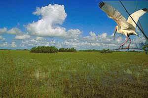 http://1.bp.blogspot.com/-_KbYTroqkyw/UIfnOj8CanI/AAAAAAAACsY/42zc-0mRk_I/s400/Taman+Nasional+Everglades.jpg