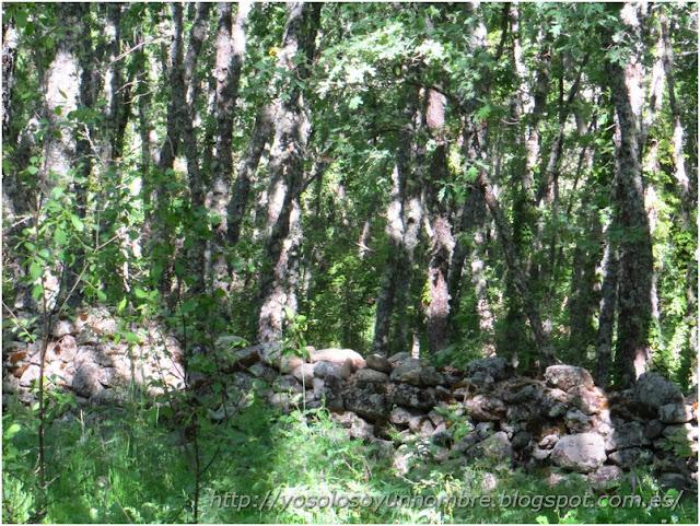 Bosque espeso de Roble