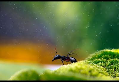 Karya Fotografi Serangga Yang Menakjubkan [ www.BlogApaAja.com ]