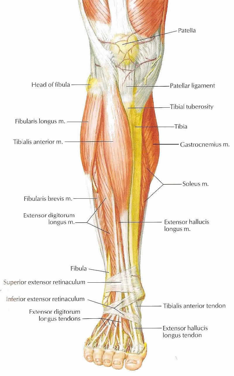 Leg Diagram Frontal Block And Schematic Diagrams
