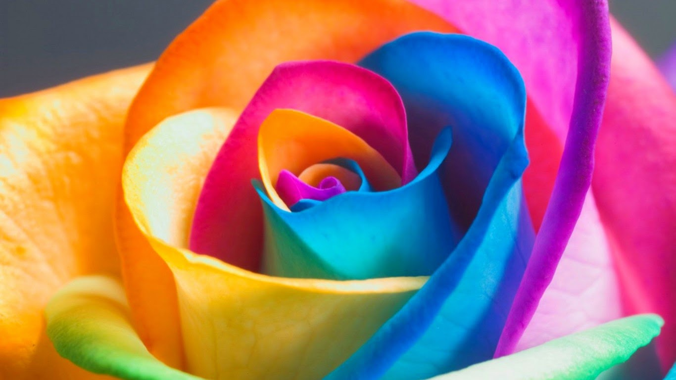 3d Flower Colorfull Rose HD Image 1366 x 768