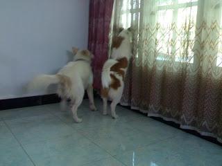 Molly dan Pochi pengen keluar tapi di luar nggak aman