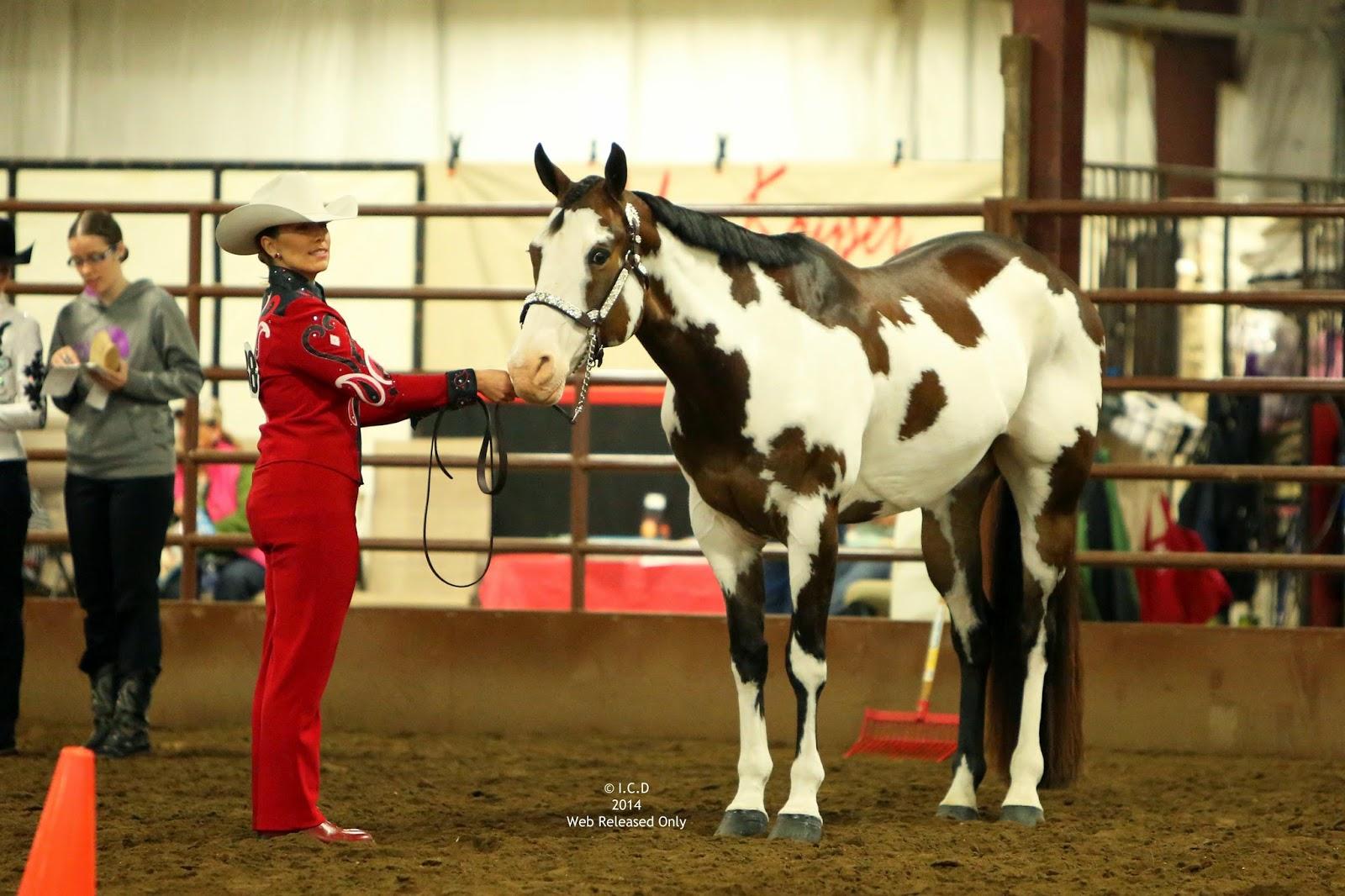 Paint horse show