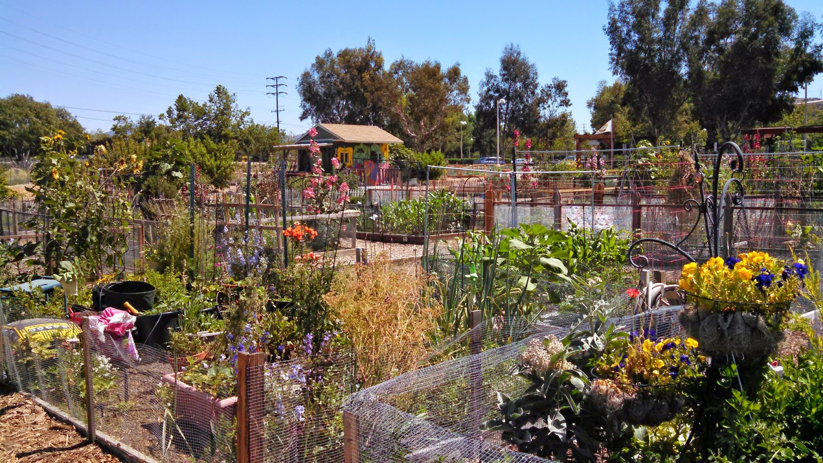 the art garden: Community Gardens — Santa Clarita Style