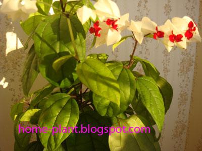 Цветы в вазе высокого разрешения
