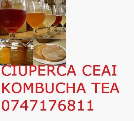 KOMBUCHA CIUPERCA CEAI KOMBUCHA TEA - 0765437394 - 0721339995 ROMANIA