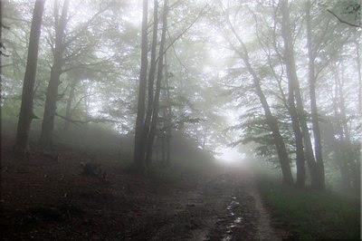 La niebla lo cubre todo
