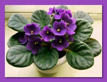 violeta-belanaselfie-d