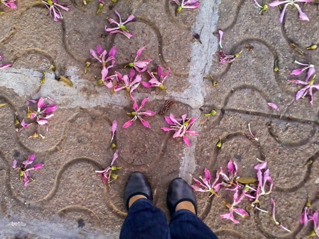 Flores de Palo borracho (Ceiba Speciosa) by betitu