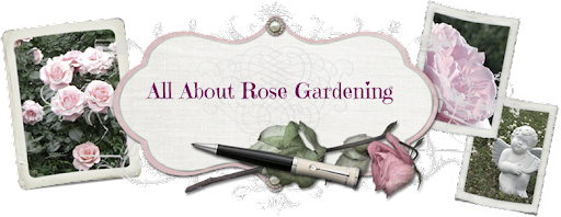 All About Rose Gardening