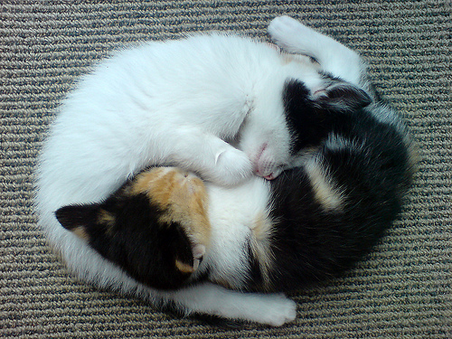 Cute Kitty Cat  Yin Yang effect - Cutipedia