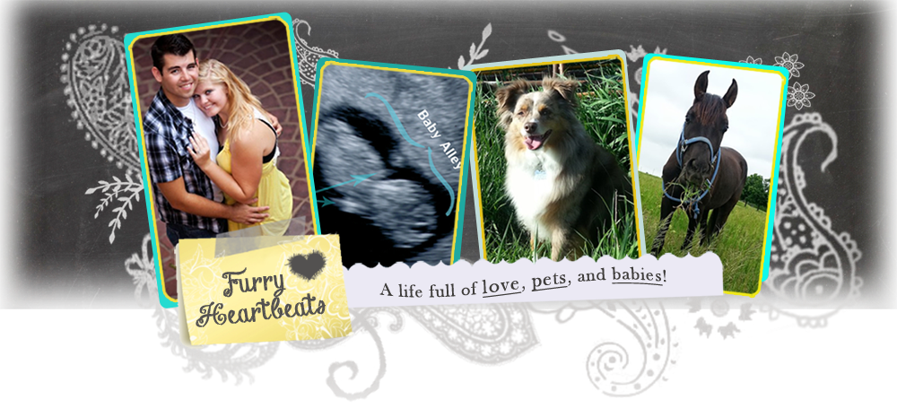 Furry Heartbeats | Life, Love, and Pets!