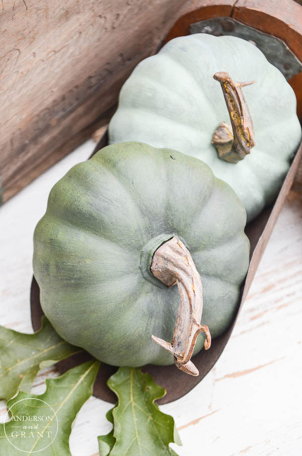 Interesting pumpkin display with mini pumpkins in vintage scoop.  |  www.andersonandgrant.com
