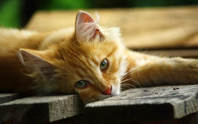 bộ sưu tập mèo con đáng yêu nhất