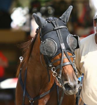 racehorse-blinders.jpg