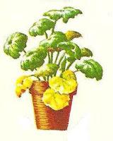 folhas-amarelas