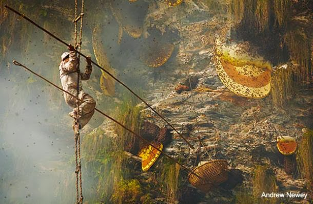 The Ancient Art Of Honey Collecting On The Himalayan Cliffs Of Nepal