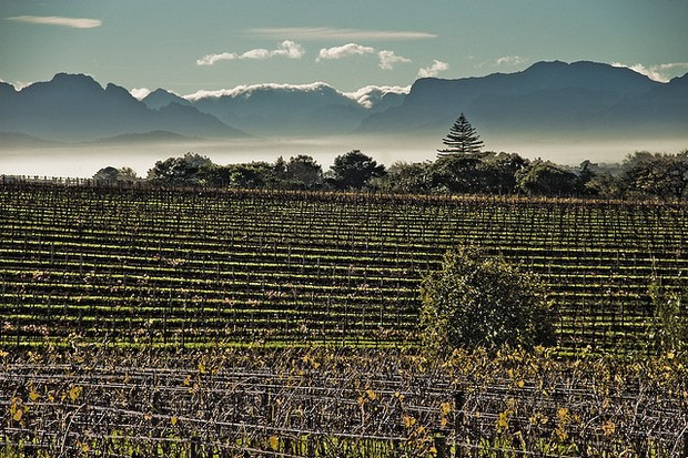 Cape Town Vineyards & Mountains
