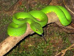 Snake found in amazon river forest