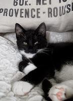 Sixten, min fina katt