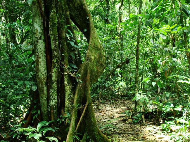 La selva o regi n amaz nica ciencia geogr fica - Mas goy fornells de la selva ...