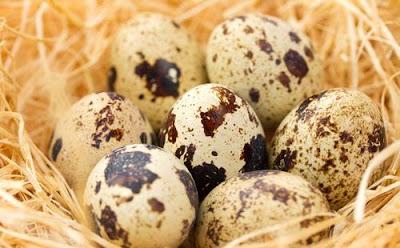 Ternyata, Telur Puyuh Bermanfaat Untuk Mencegah Kanker