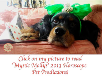Mystic Molly 2013 Pet Horoscope!