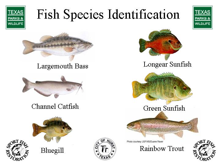 Brandedhub fish species for 7 fishes list