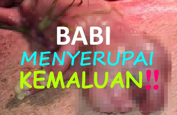 SUBHANALLAH KUASA TUHAN Gambar Babi Menyerupai Manusia Dengan Penis Di Dahi Tersebar