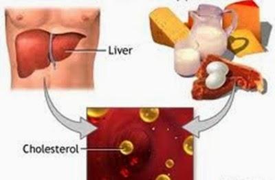Cholesterol là gì và các kiến thức cần biết