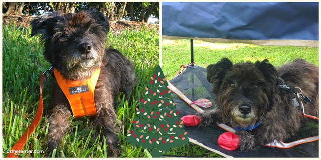 Holiday Gift Guide for Dogs: Sleepypod Clickit Utility Harness, Sleepypod Clickit Sport Harness, Quick Shade Pet Pet Shade