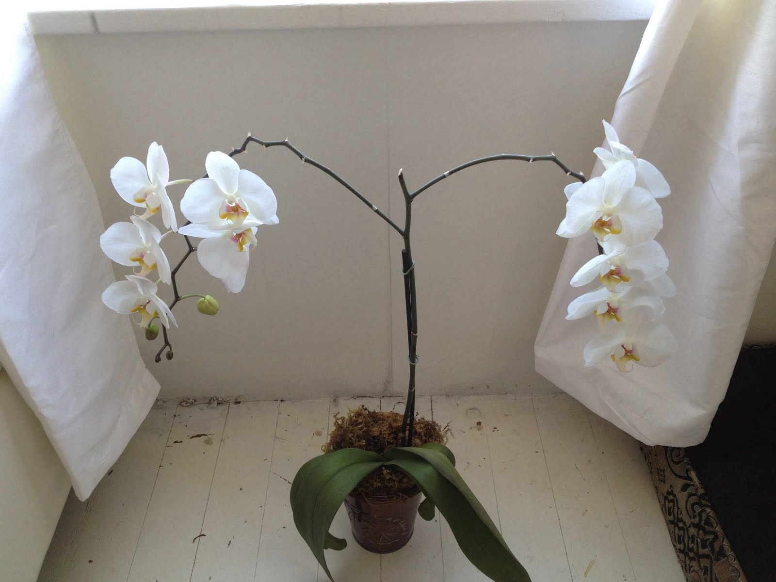 Love WHITE orchids.