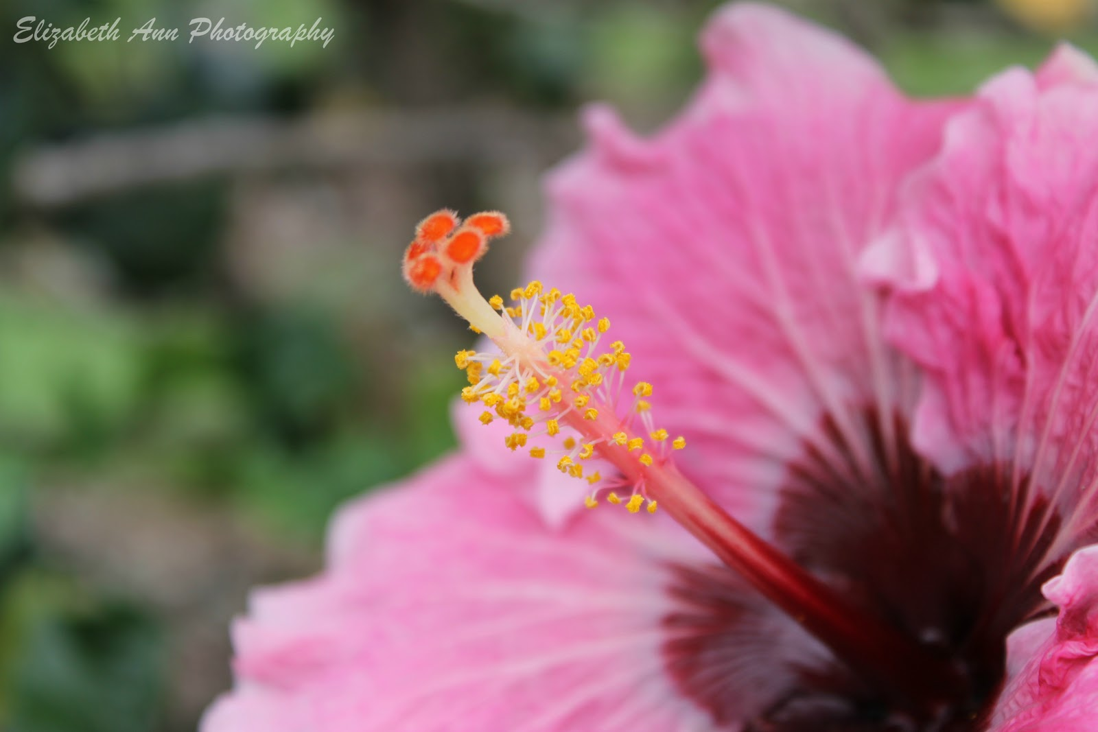 The greatest of these is love weekend flowers hibiscus beauty i love the variety of colours in this one from the petals to the pistil stamen structure izmirmasajfo