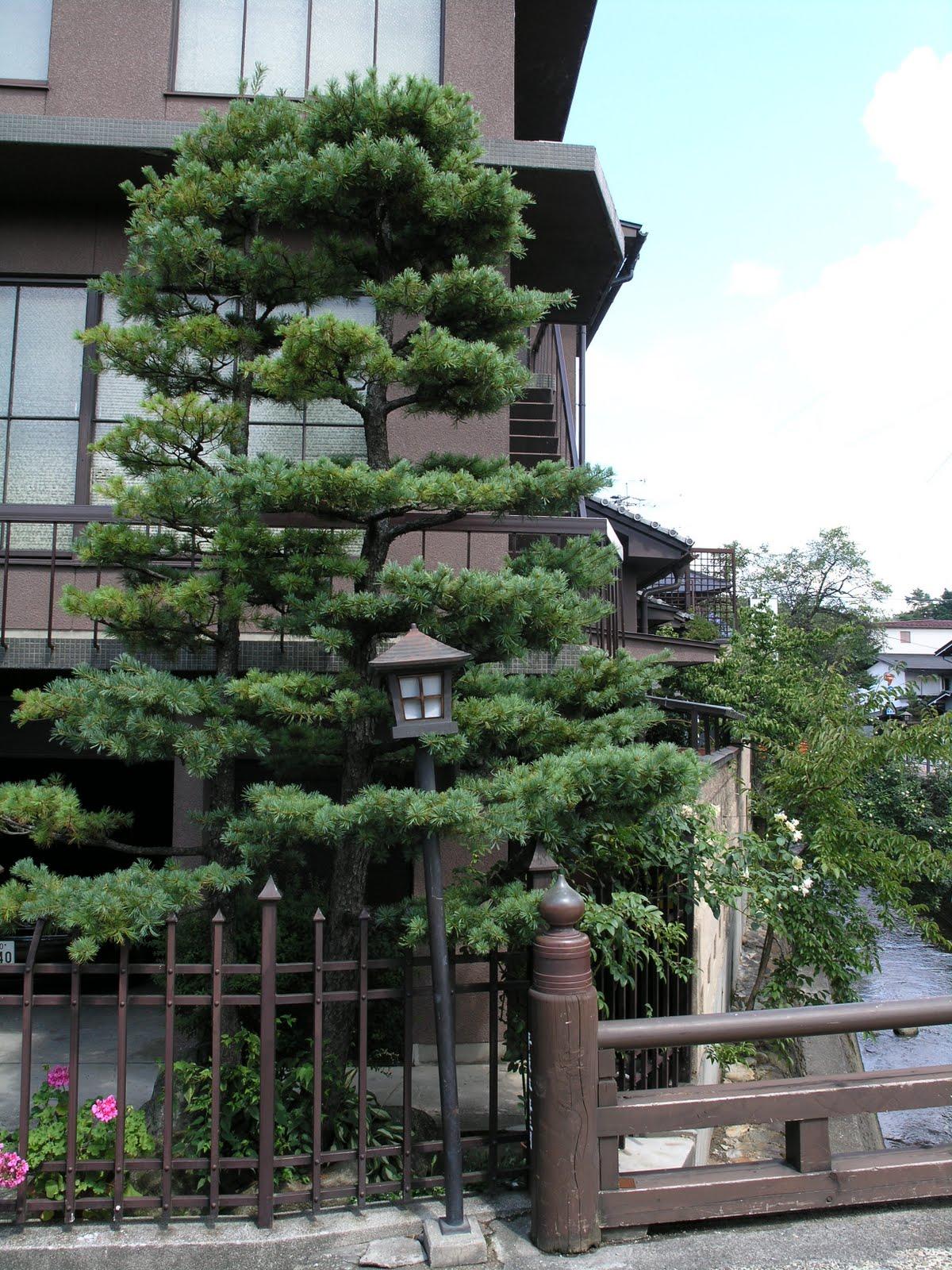 Planeta dunia los colores de un jard n japon s for Arboles para jardin japones