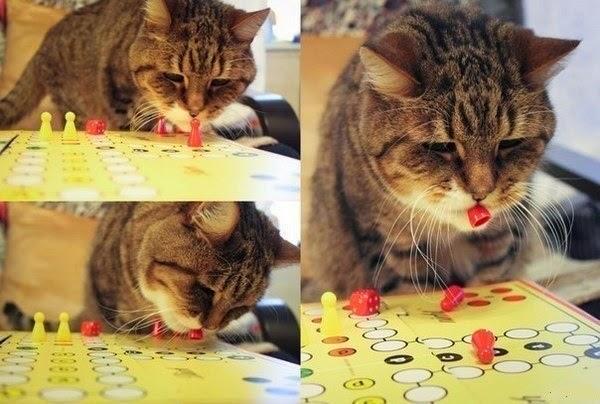 кот играет в настольные игры
