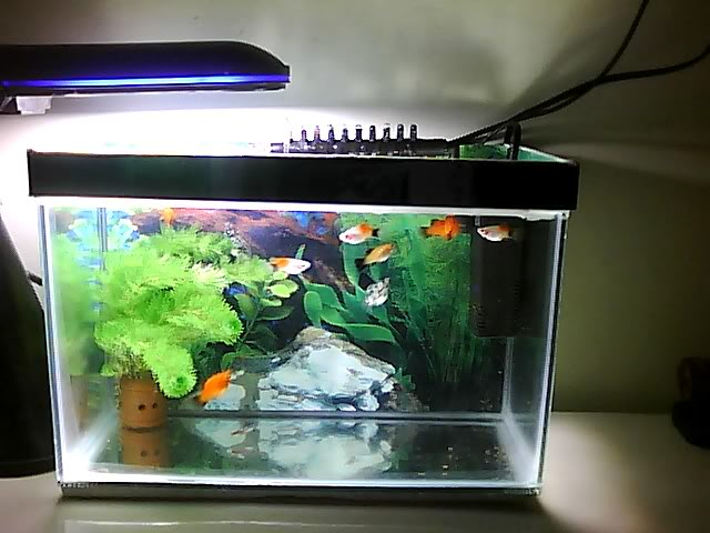contoh mini fiber aquarium)